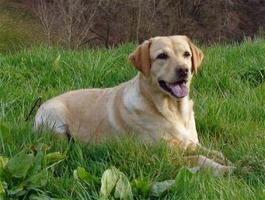 eifelsteig und hund